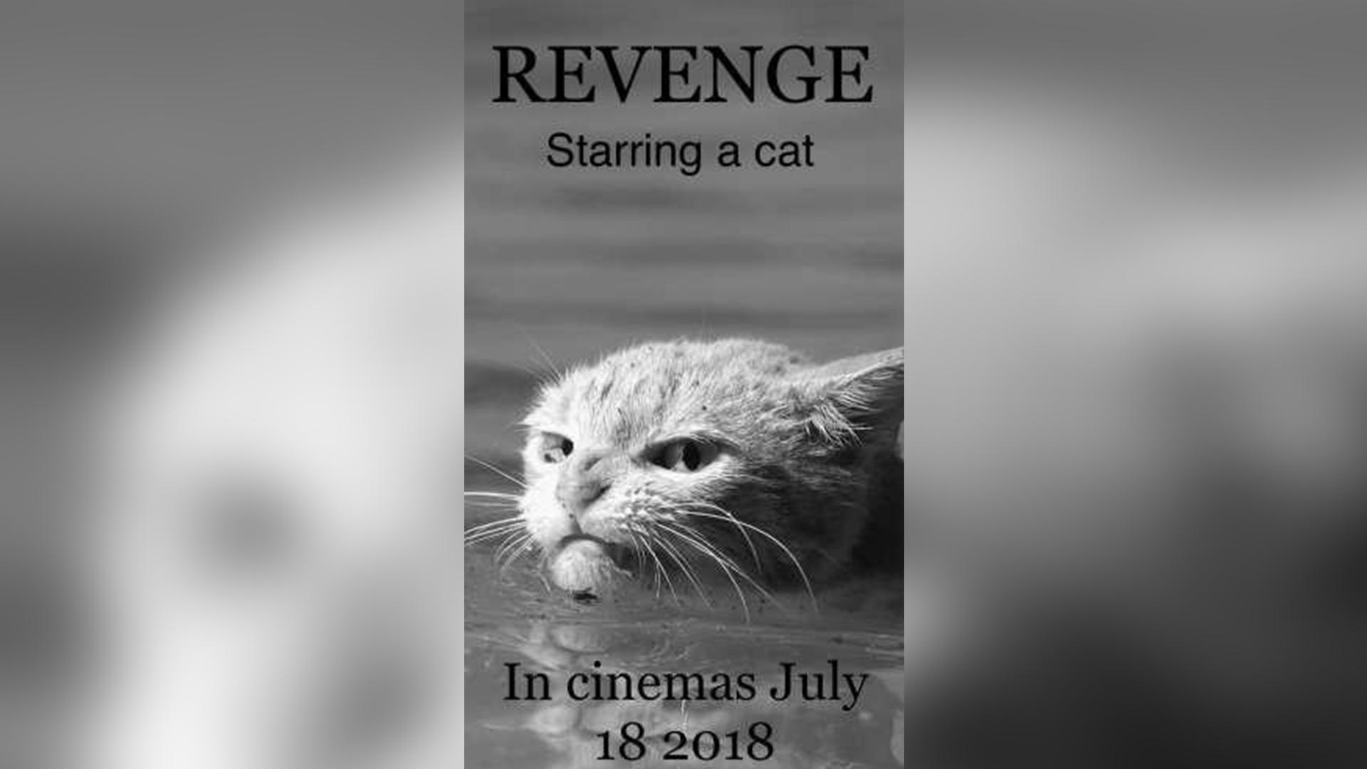 Месть. В главной роли кот. В кинотеатрах с 18 июля 2018 года.
