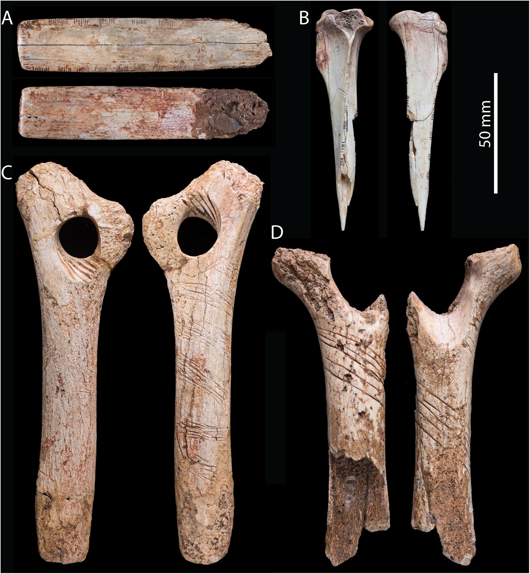 Диагональные линии на бедренных костях, скорее всего, выполняли в рамках какого-то культа. Фото: © journals.plos.org