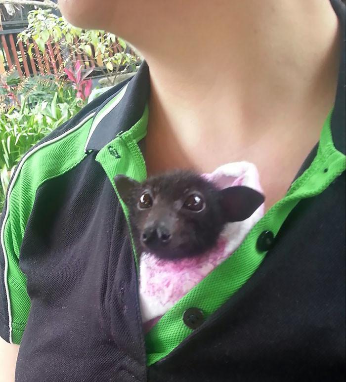 Australian Bat Clinic & Wildlife Trauma Centre