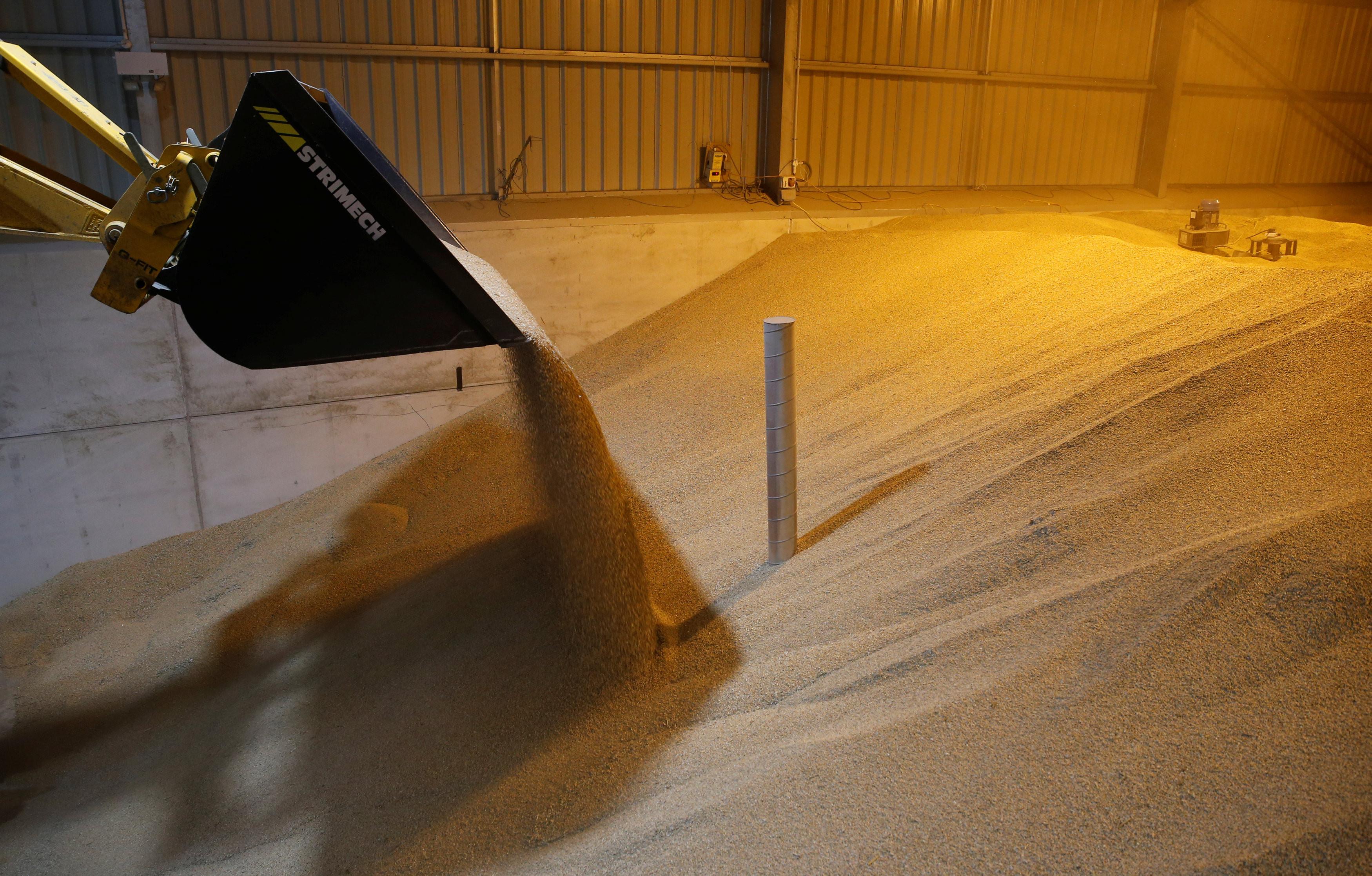 <p>Зерно пшеницы. Фото: &copy; REUTERS/Peter Cziborra</p>
