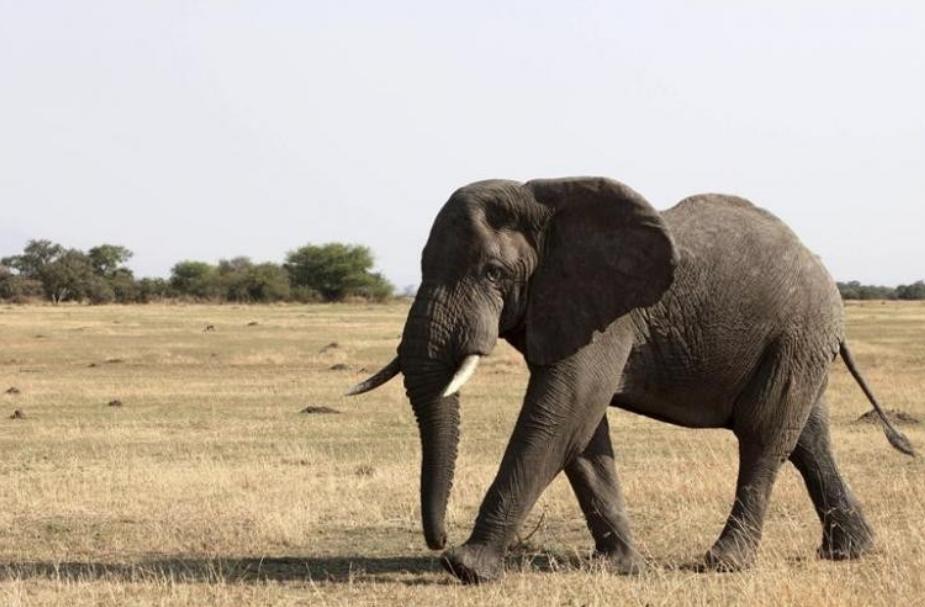 <p><span>Слон. Фото: &copy;&nbsp;</span><span>REUTERS/Noor Khamis</span></p>