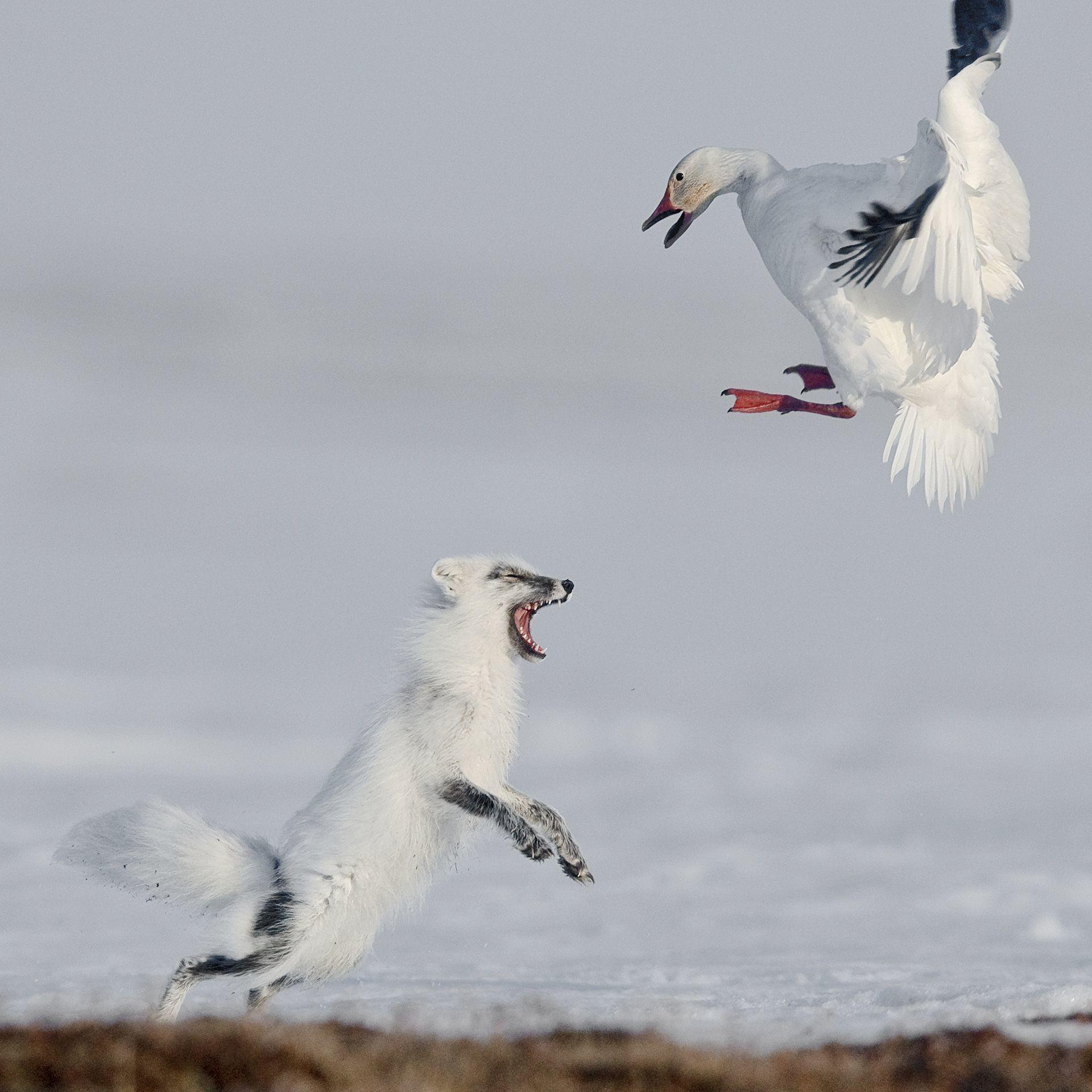 """Фото © Sergey Gorshkov/""""Attack"""""""