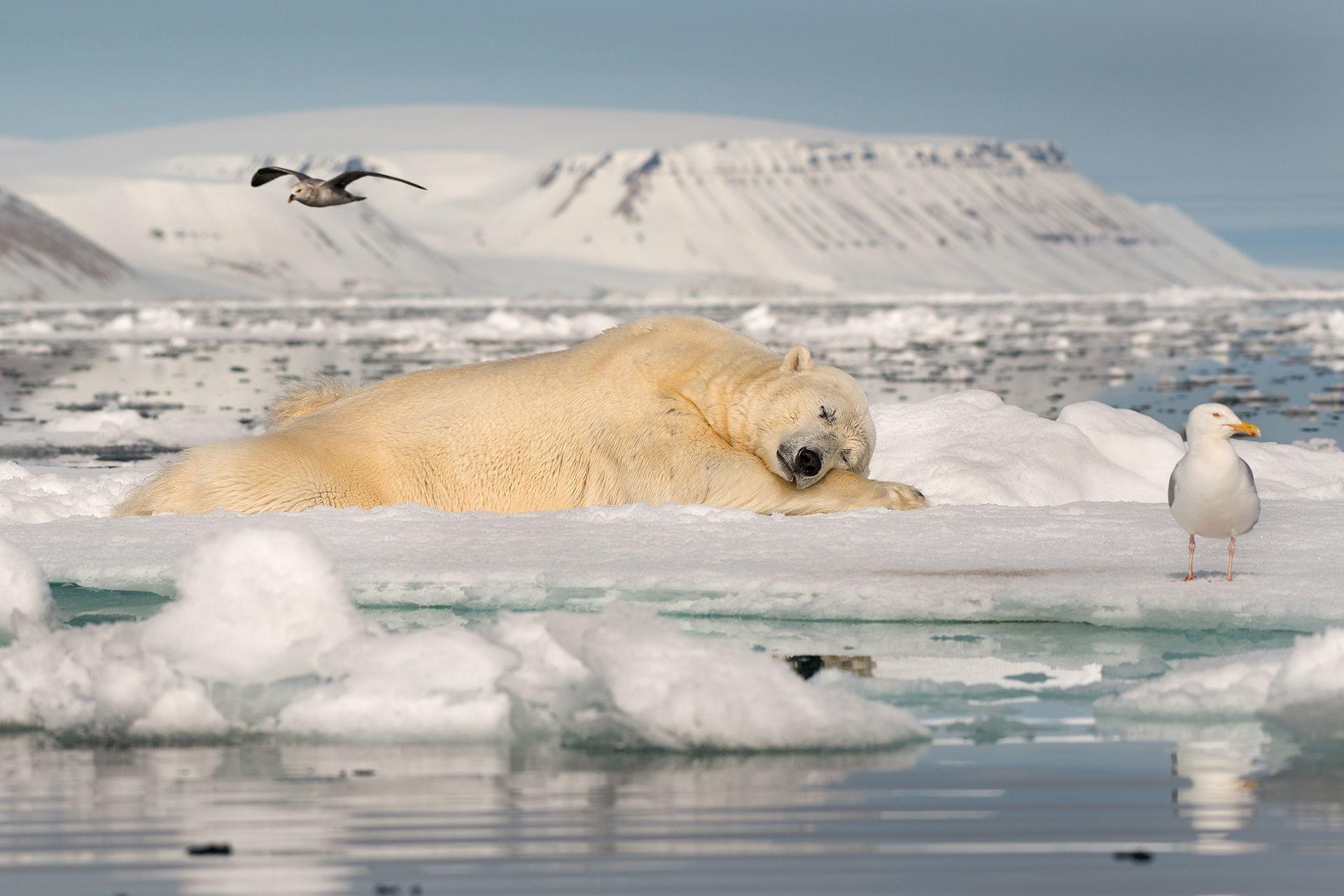 "Фото © Roie Galitz/""Dreaming on Sea Ice"""