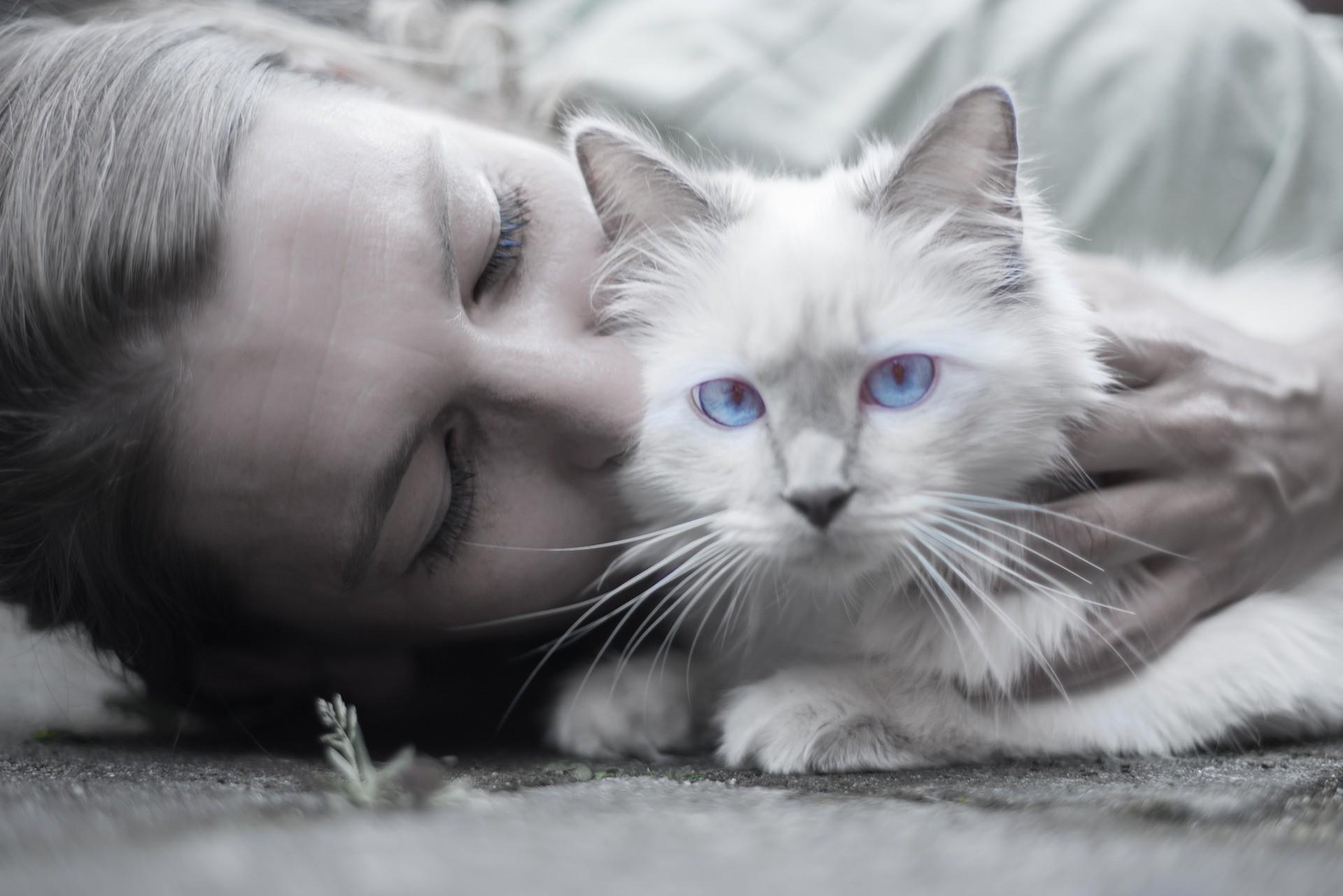Какие болезни у бездомных кошек thumbnail