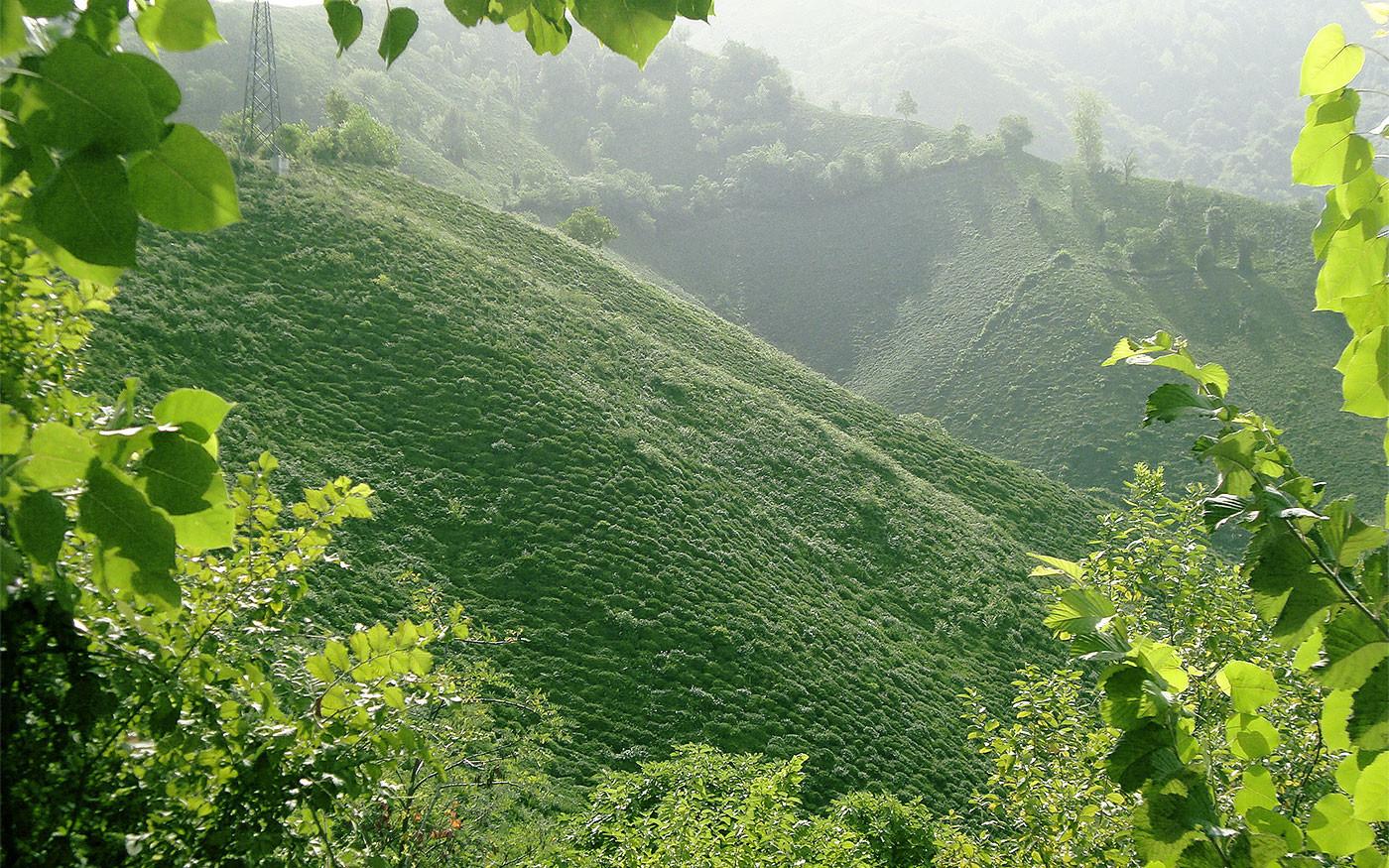 Фото: © Википедия/Arvid Qasemy