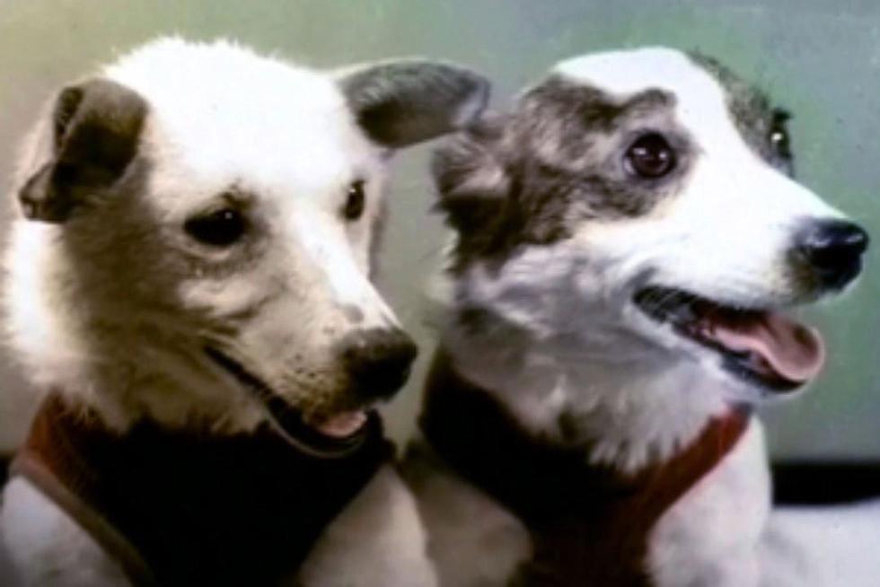 Собаки Белка и Стрелка. Фото: © wikipedia.org