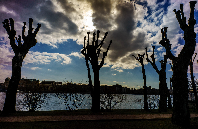 <p><span>Стриженые деревья на набережной Малой Невки в Санкт-Петербурге.&nbsp;</span></p> <p><span>Фото: &copy; РИА Новости/</span><span>&nbsp;Алексей Даничев</span></p>