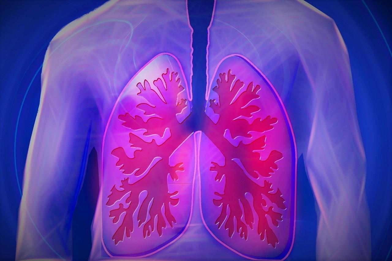 Лёгкие человека. Фото: © pexels.com