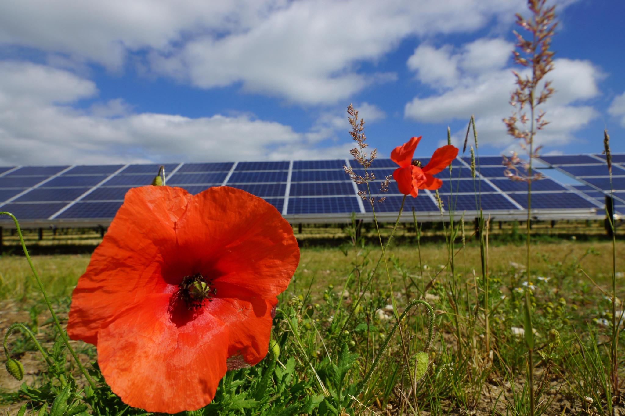 "<p>Фото &copy; <a href=""https://www.flickr.com/photos/126337375@N05/15756820490/"" target=""_blank"">Flickr/Solar Trade Association</a></p>"