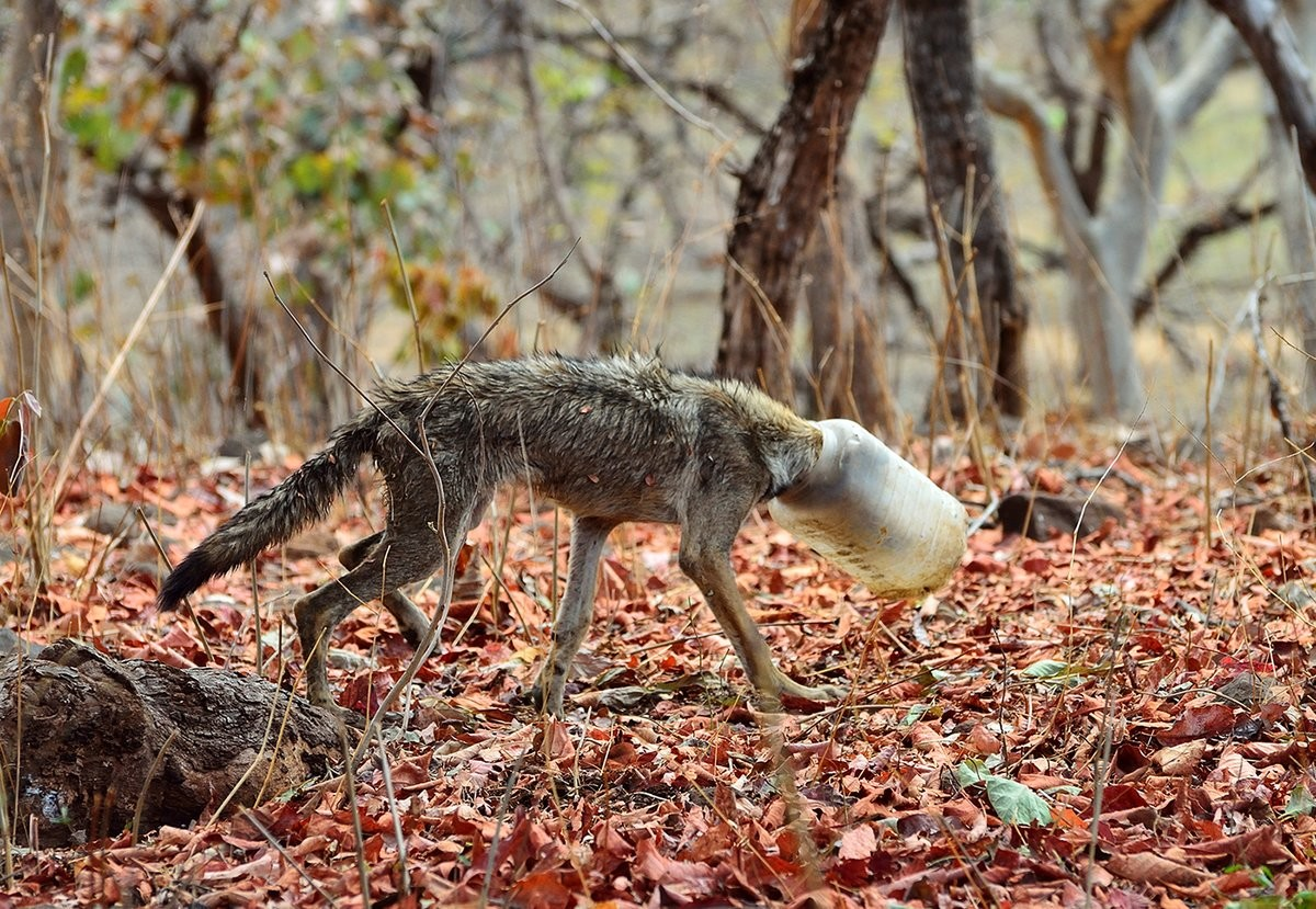Картинки по запросу волк с бутылкой на голове