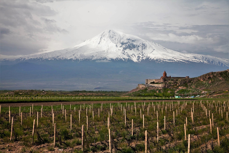 Виноградники в Араратской долине. Фото: © wikipedia.org / Maks Karochkin