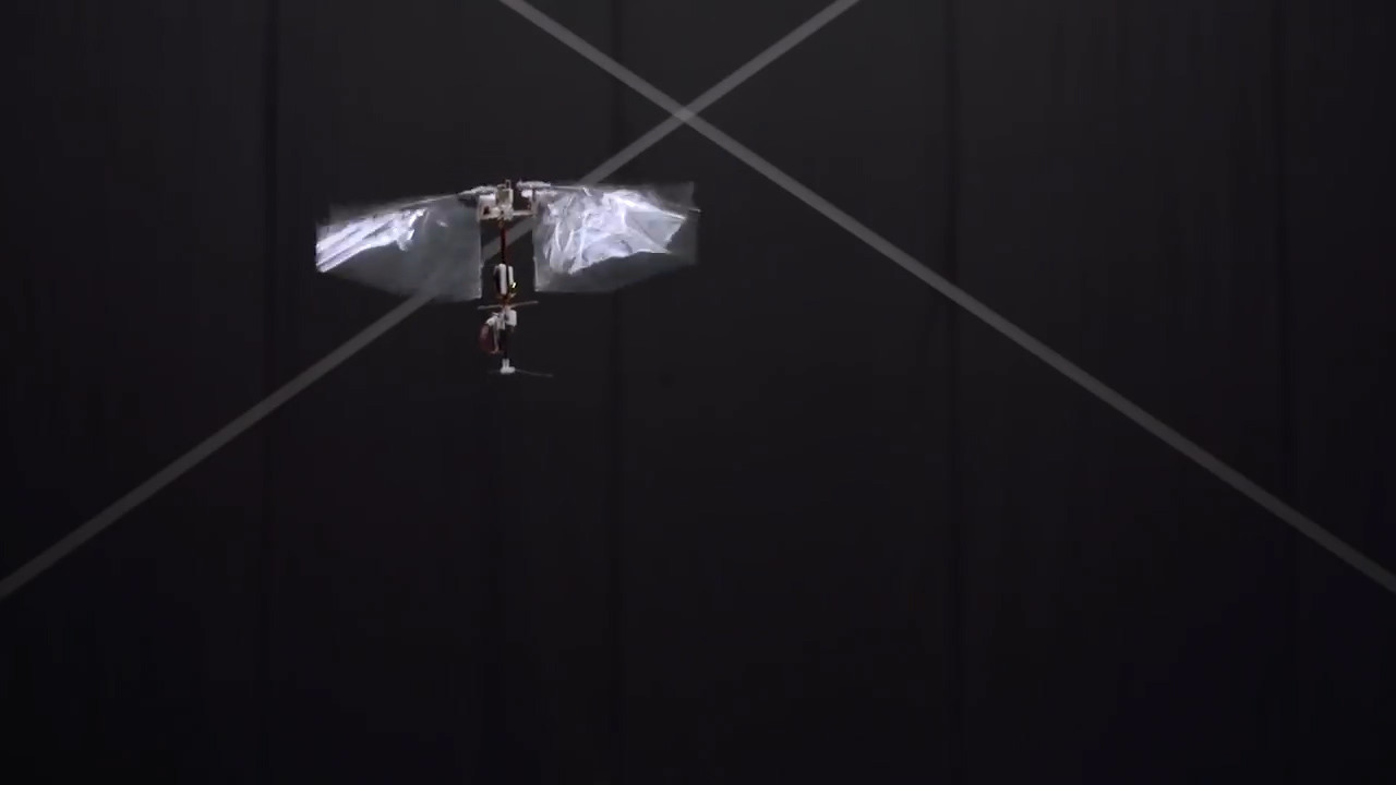 <p>Скриншот: &copy; YouTube/DelFly Nimble - an agile insect-inspired robot</p>