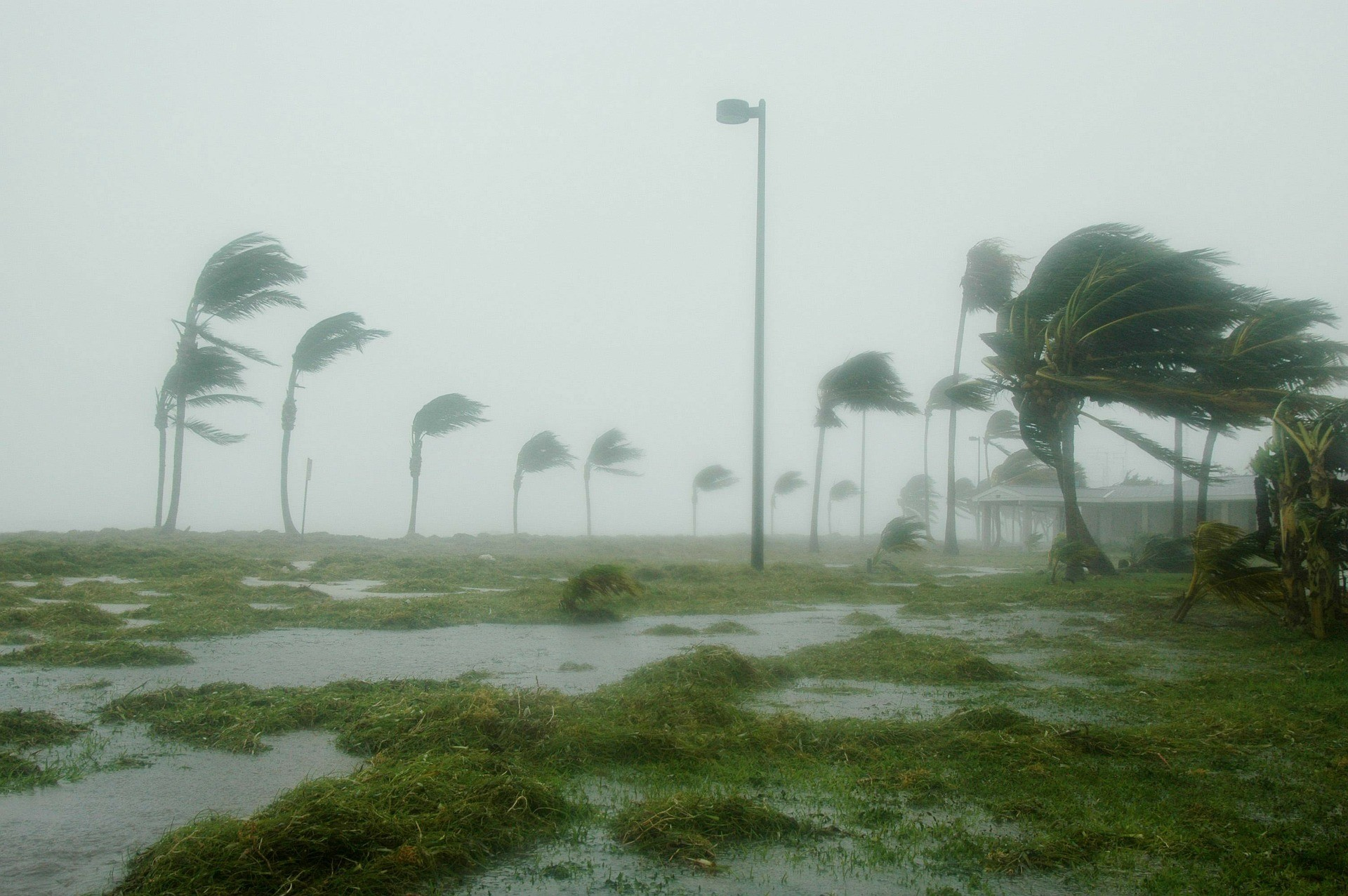 "<p><span>Фото: &copy; Pixabay /&nbsp;</span><a href=""https://pixabay.com/en/key-west-florida-hurricane-dennis-86025/"">12019</a></p>"