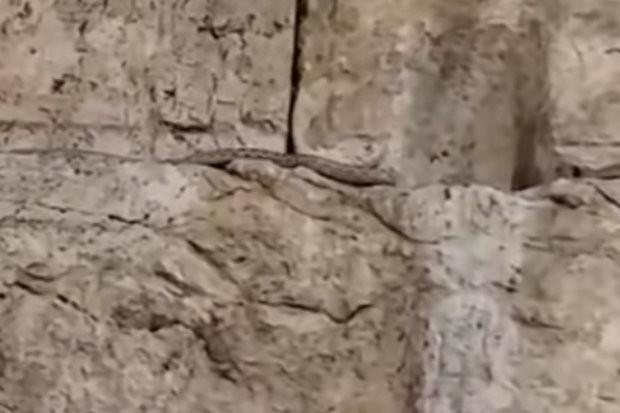 Скриншот видео: © Youtube/WesternWallNews