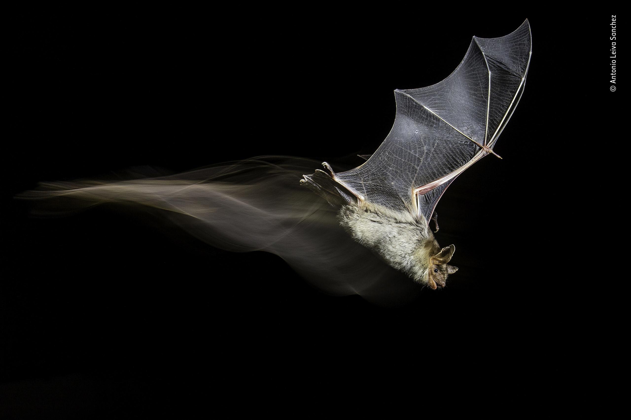 Фото: © Wildlife Photographer of the Year/Natural History Museum/Antonio Leiva Sanchez