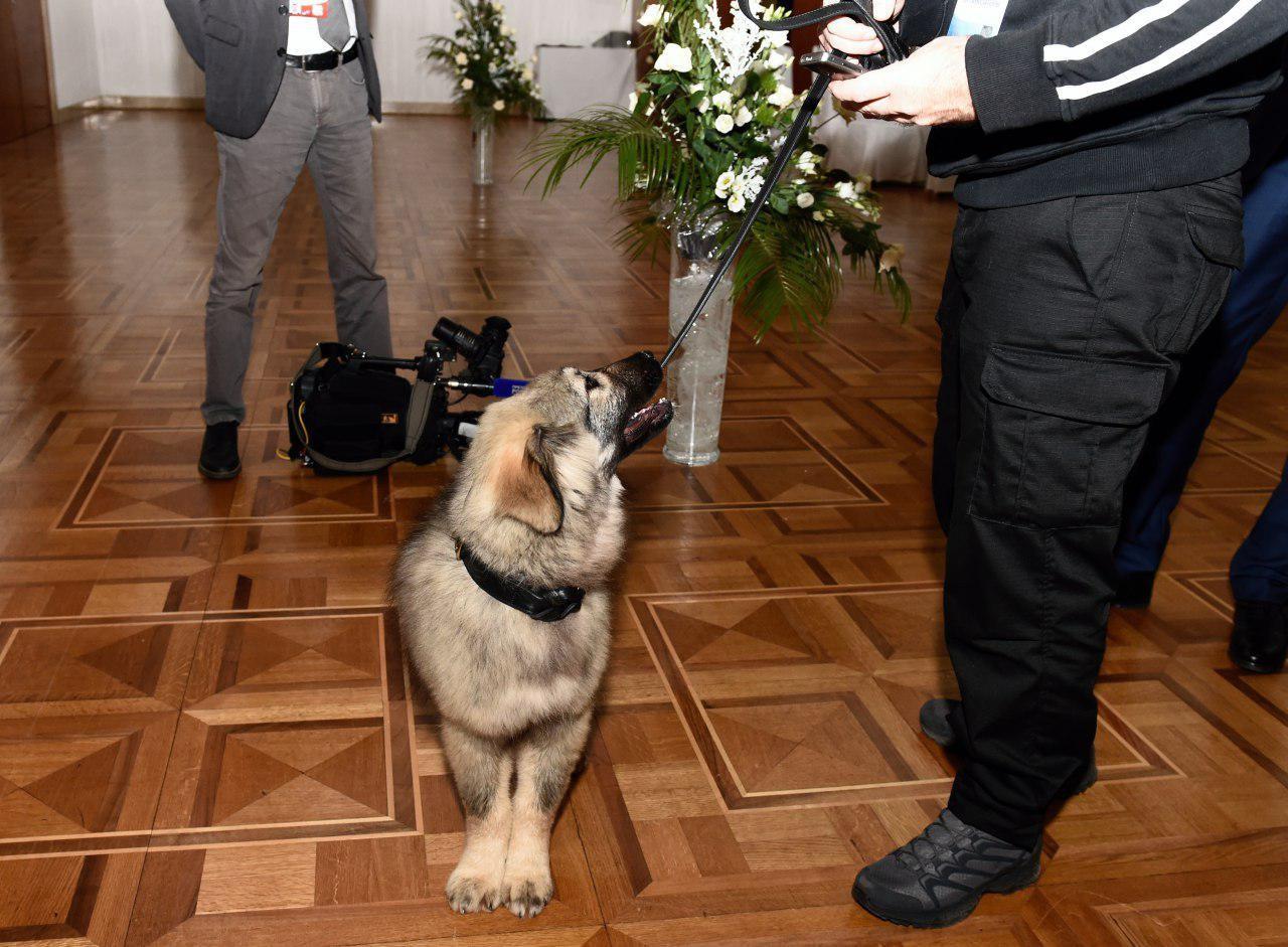<p><span>Фото: &copy; Пресс-служба президента Сербии</span></p>