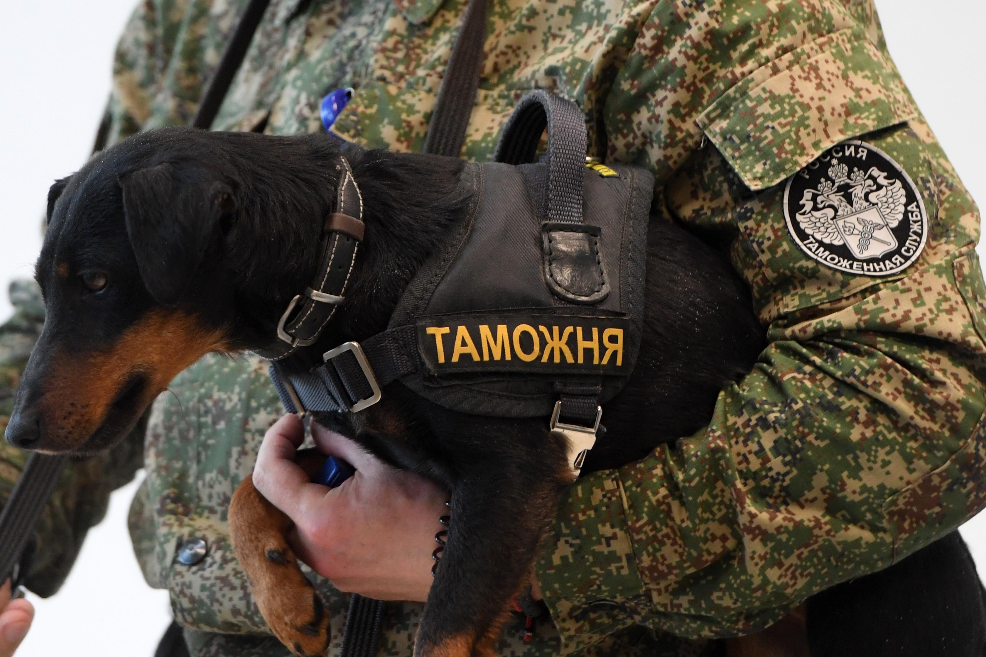 <p>Фото: &copy; РИА Новости/Максим Богодвид</p>