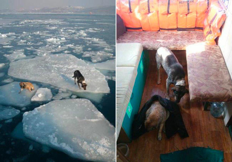 Фотографии предоставлены супругой капитана рыболовецкого судна