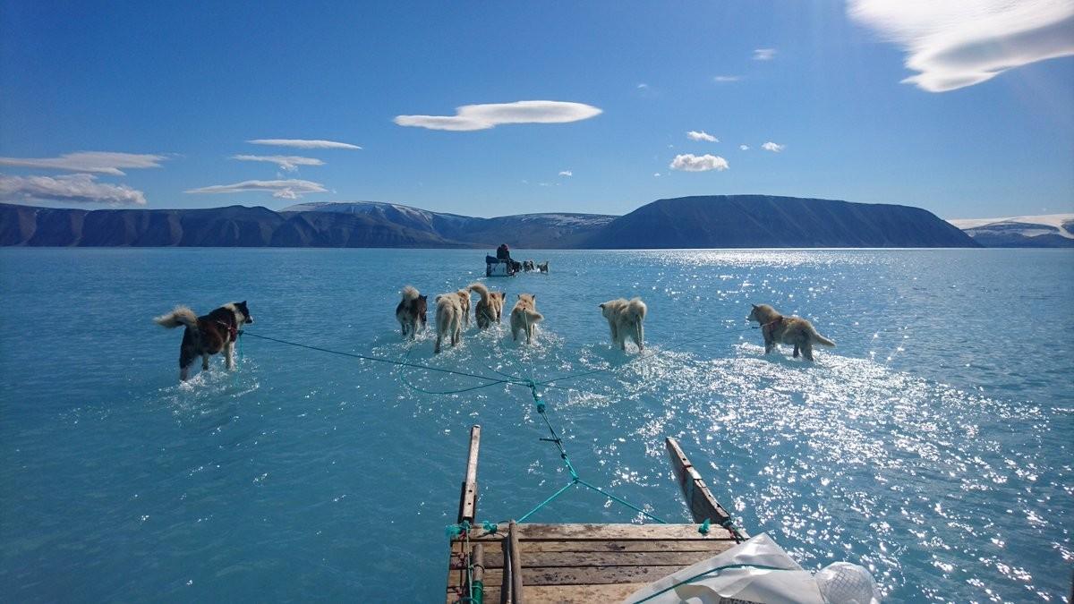 "<p>Собачья упряжка во время таяния льдов на северо-западе Гренландии. Фото © Twitter / <a href=""https://twitter.com/RasmusTonboe"" target=""_self"">Rasmus Tonboe</a></p>"