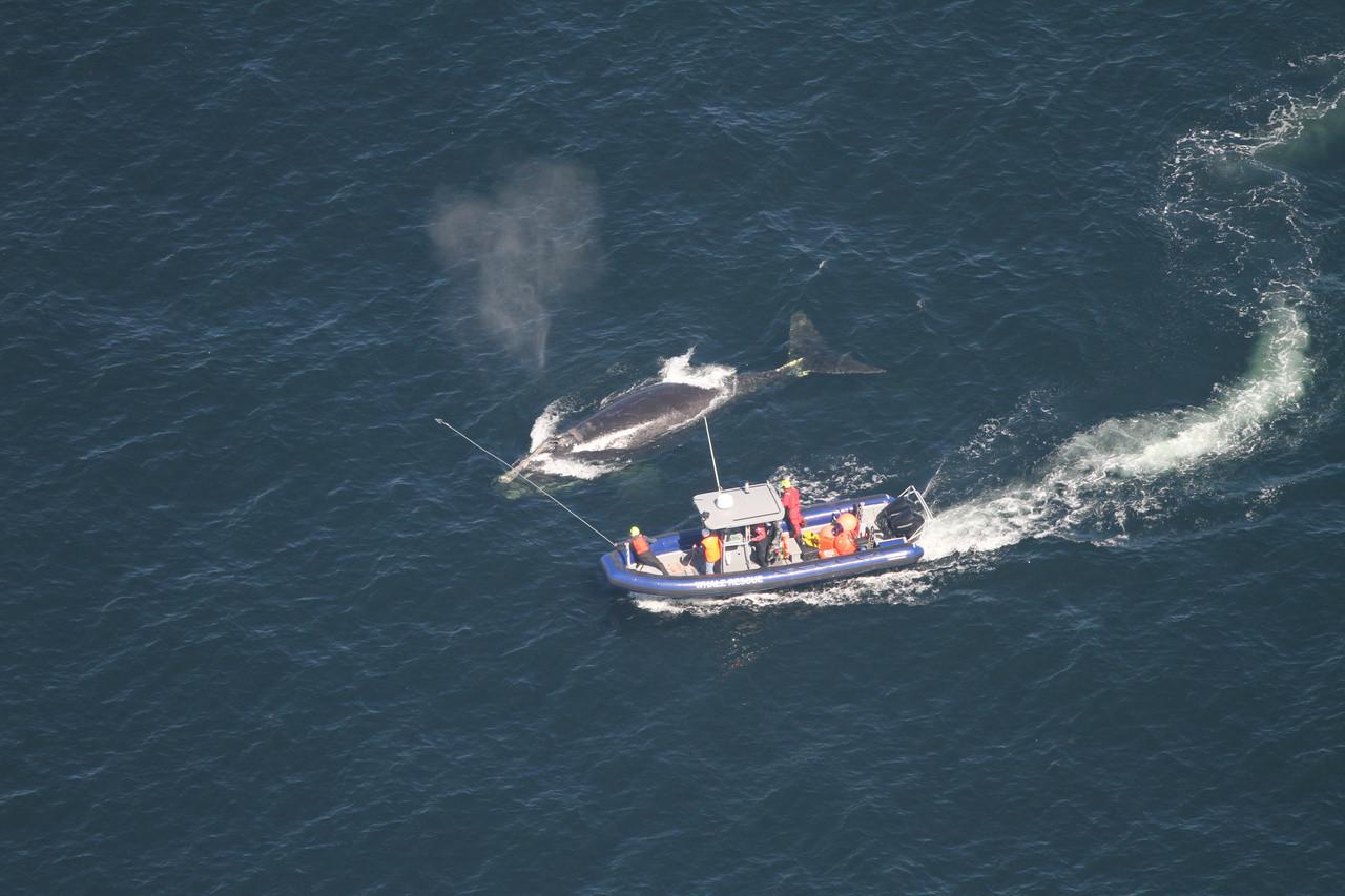<p>Фото © NOAA Fisheries / Alison Ogilvie</p>