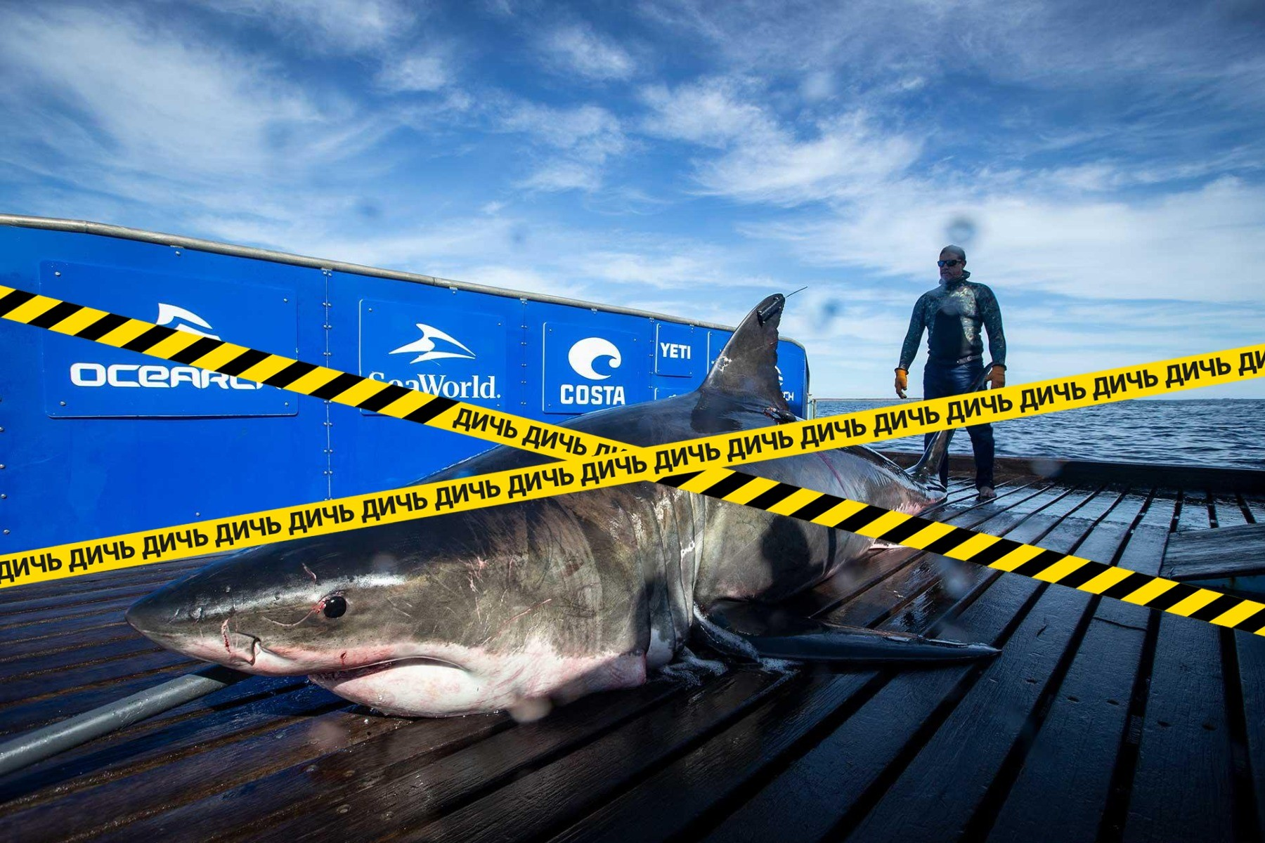 "<p>Фото © Twitter/<a href=""https://twitter.com/SharkMontauk/status/1179722016095703040/photo/3"" target=""_self"">SharkMontauk</a></p>"