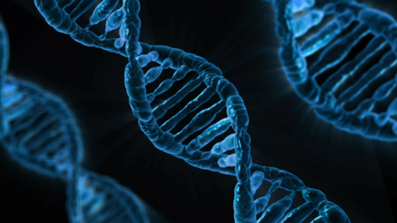 При расследовании экопреступлений МВД будет использовать анализ ДНК тканей животных