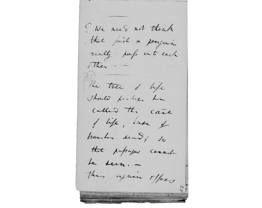 Фото © Cambridge University Library