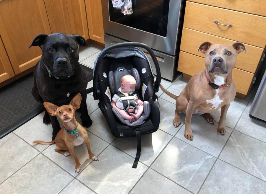 Фото © Facebook / MAX Potential Dog Training