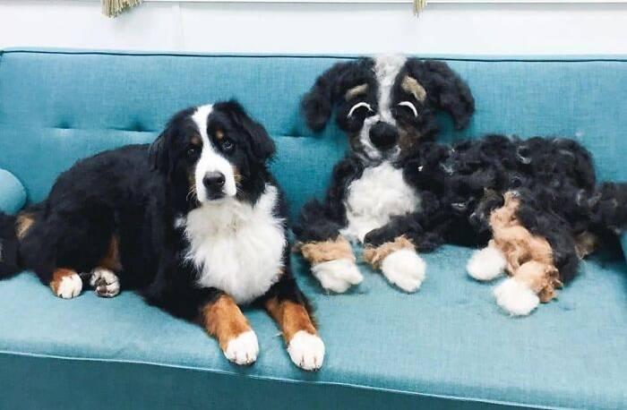 10 фото того, насколько сильно линяют собаки, когда шерсть стала даже полноценным членом семьи