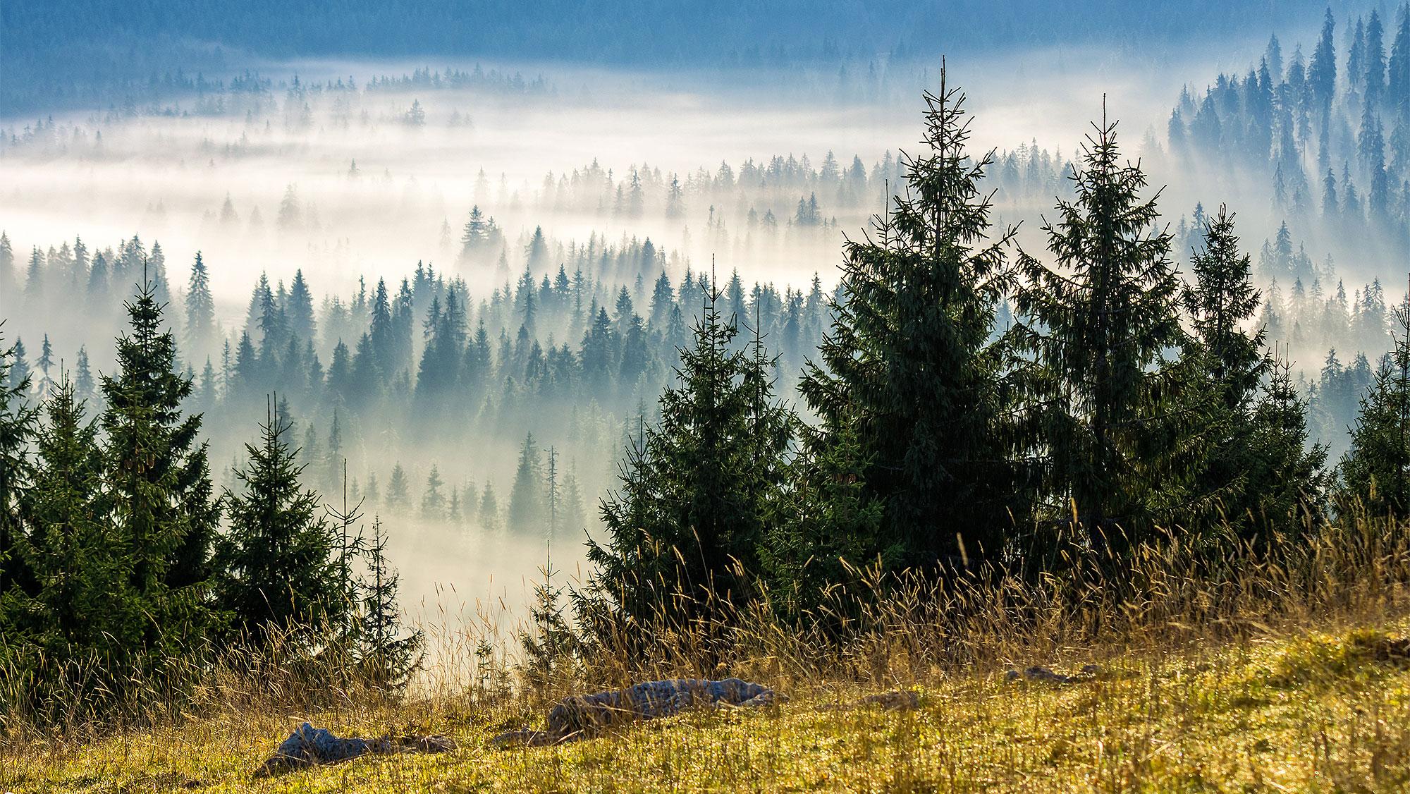 <p>Фото © Shutterstock</p>