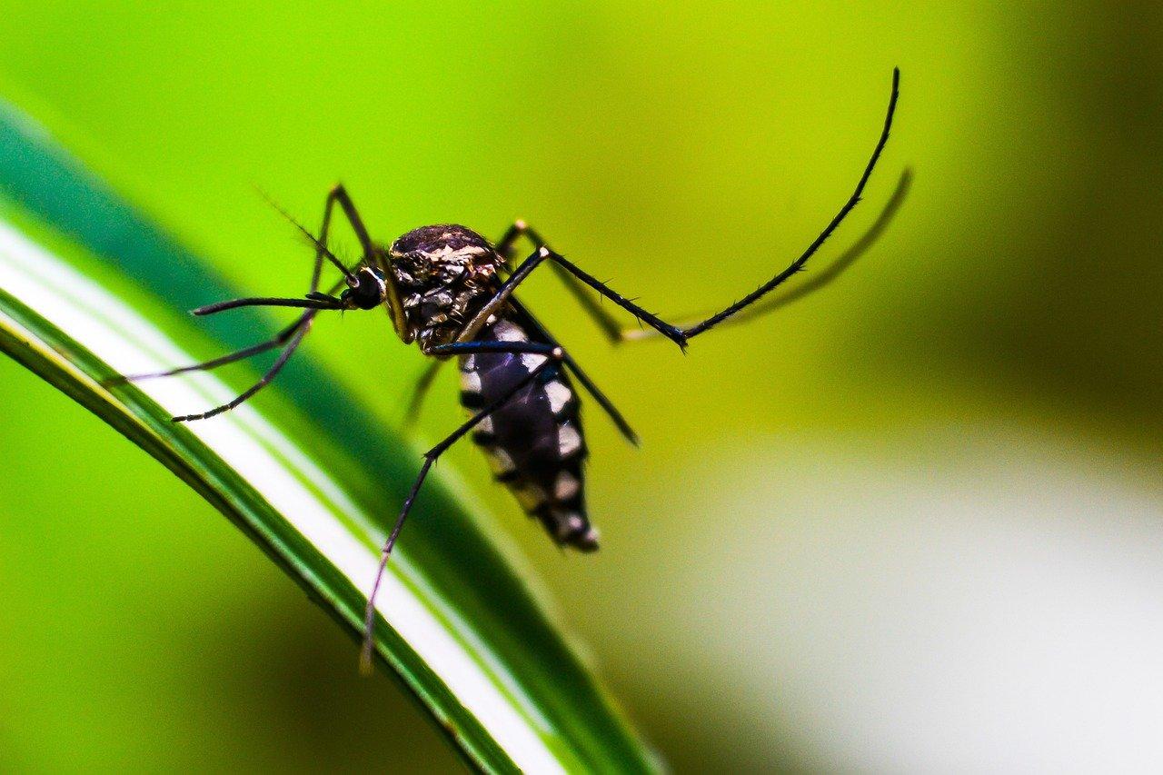 Ещё один россиянин умер от малярии после поездки на Занзибар