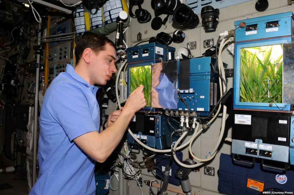 У российских космонавтов на МКС может вновь появиться оранжерея