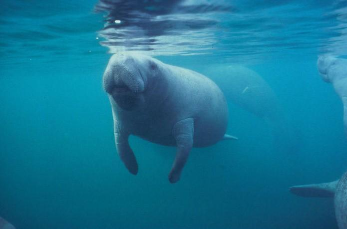 Фото © U.S. Fish and Wildlife Service Southeast Region