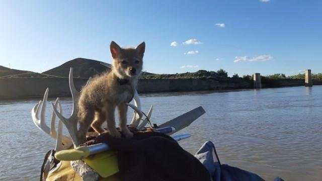 "<p>Фото © <a href=""https://www.boredpanda.com/man-saves-coyote-cub-from-drowning-lives-10-days-on-raft-wrsos/?utm_source=brkng&utm_medium=referral&utm_campaign=organic"" target=""_blank"" rel=""noopener noreferrer"">BoredPanda</a></p>"
