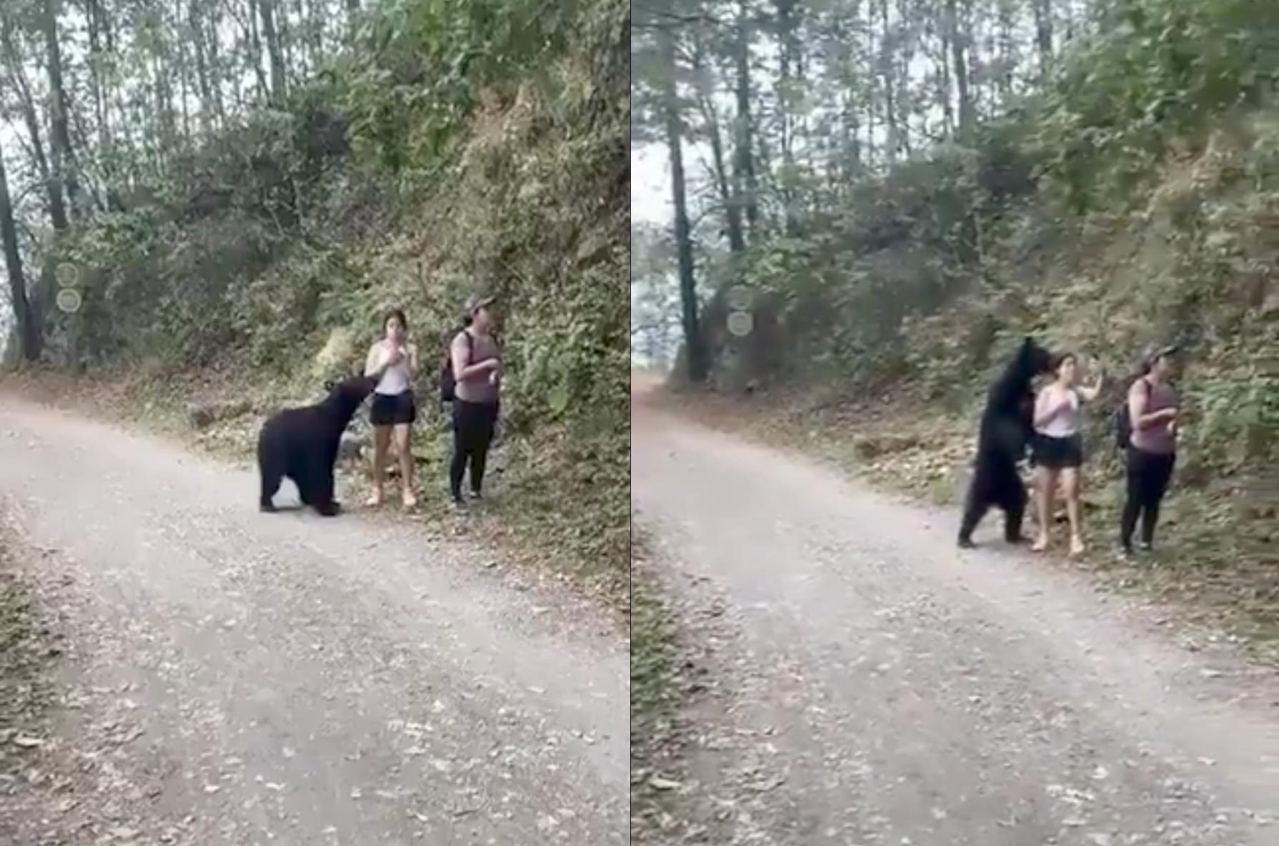 """На дно пошёл"". На Байкале туристы с лодки расстреляли медведя в упор"