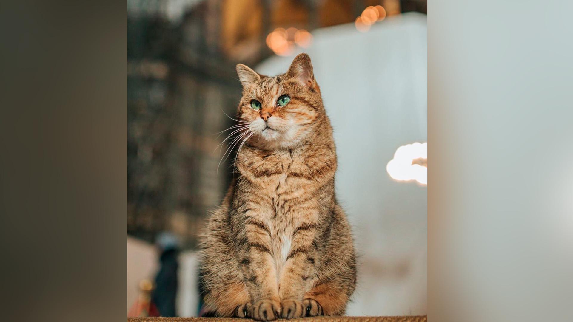 Кошку – жительницу собора Святой Софии пообещали не выгонять из-за смены статуса на мечеть