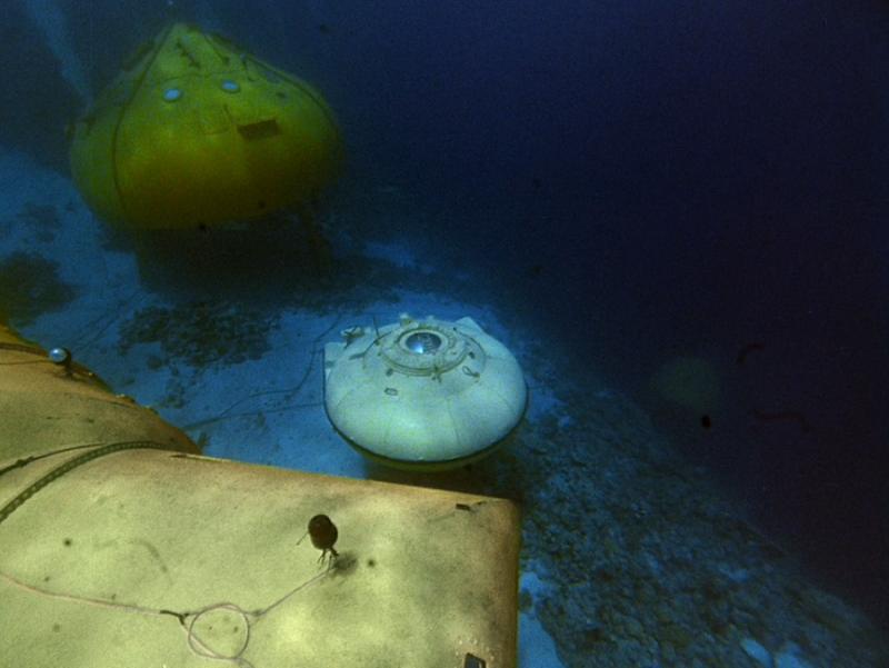 Фото © Cousteau.org