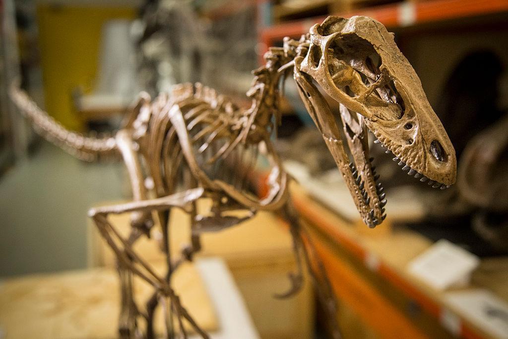 На Мадагаскаре нашли 10-сантиметрового предка динозавров