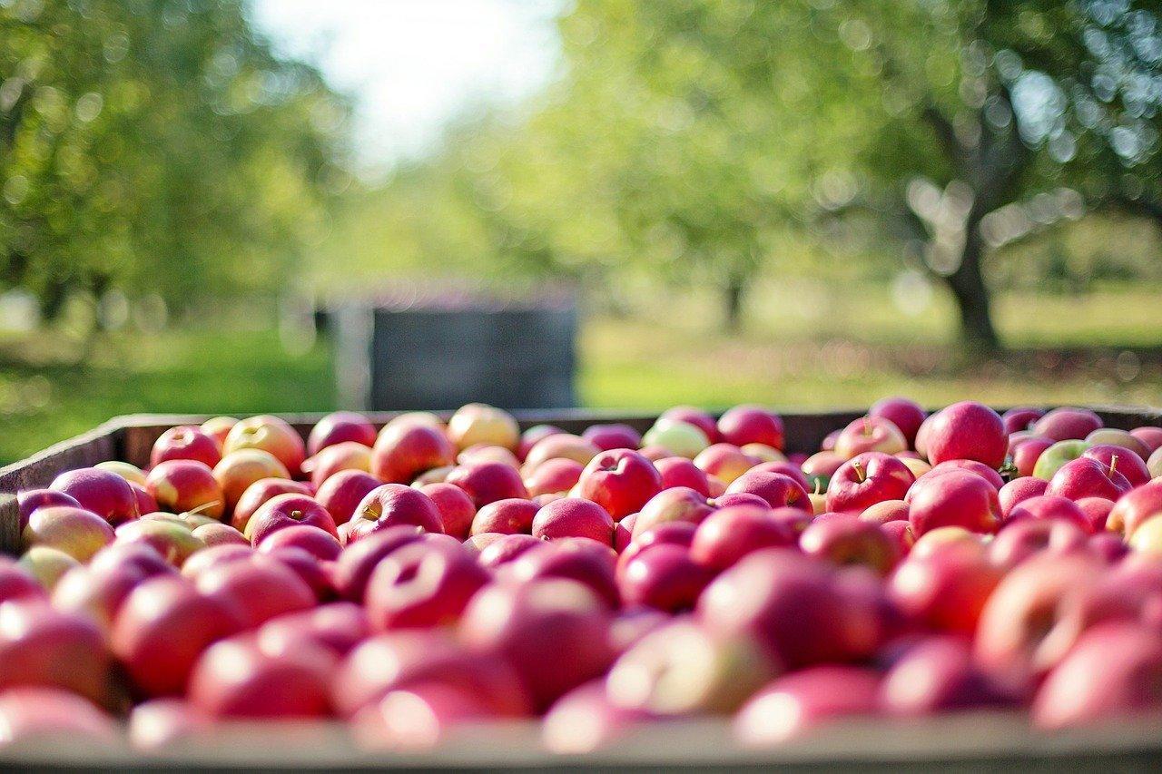 Цены на яблоки в России выросли почти на треть