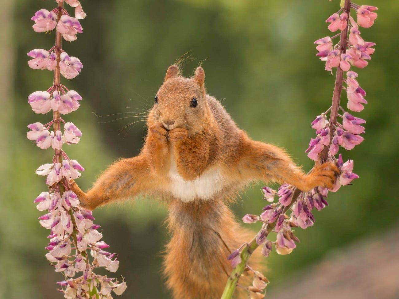 Фото © Courtesy of Comedy Wildlife Photo Awards