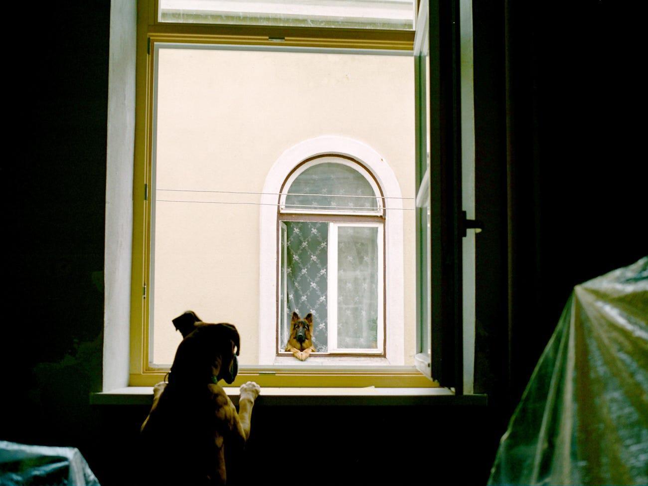 Фото © Stasys Povilaitis / Mars Petcare Comedy Pet Photo Awards