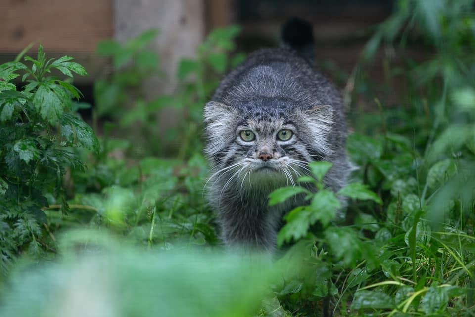 Фото © Московский зоопарк / Анна Орлова