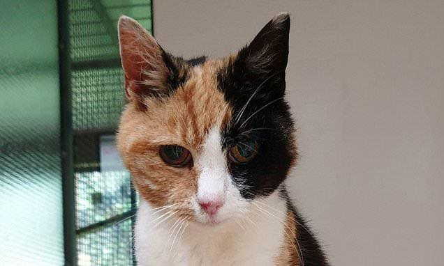 Семья из Британии нашла свою кошку спустя 12 лет после пропажи и отказалась от неё