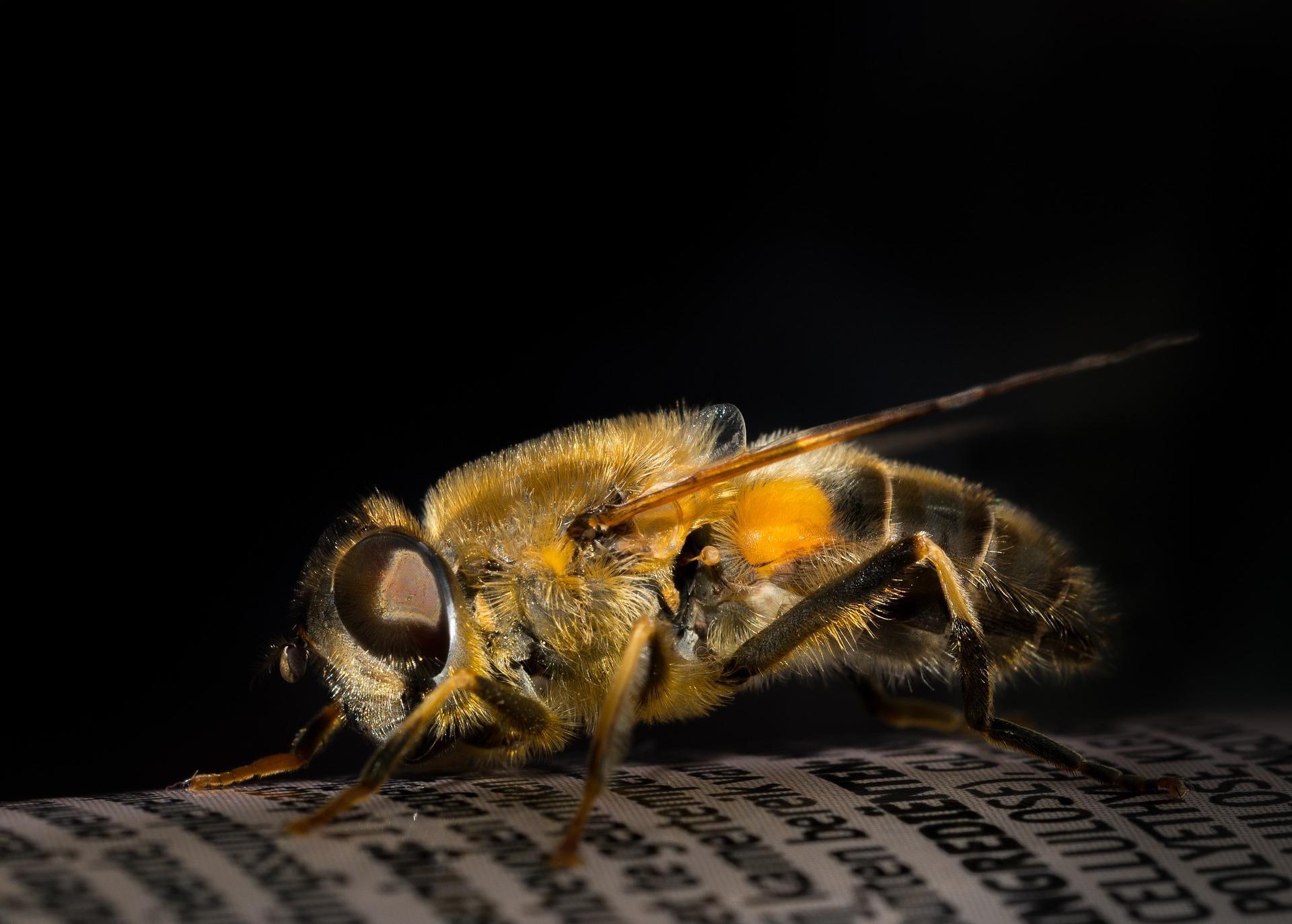 Скорая ехала час. Москвичка умерла от укуса пчелы в Смоленской области