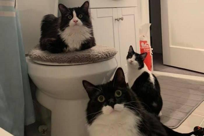 А что ты тут делаешь? 10 котов, которые любят подглядывать за хозяевами в самые интимные моменты