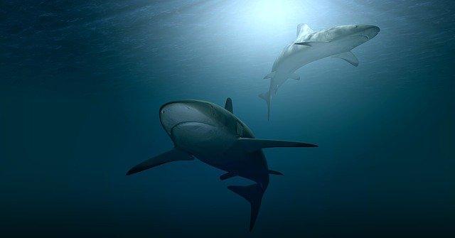 В США беременная женщина бросилась на помощь мужу, на которого напала акула