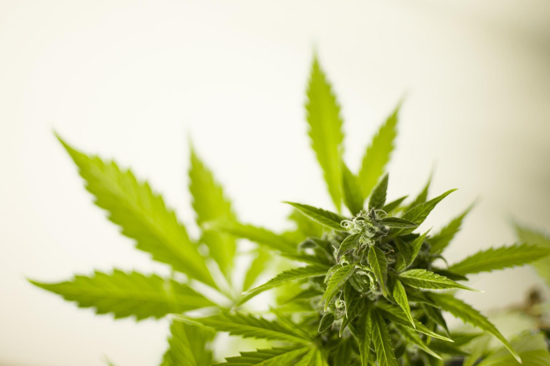 В Индии четверых полицейских будут судить за перепродажу 159 килограммов изъятой марихуаны