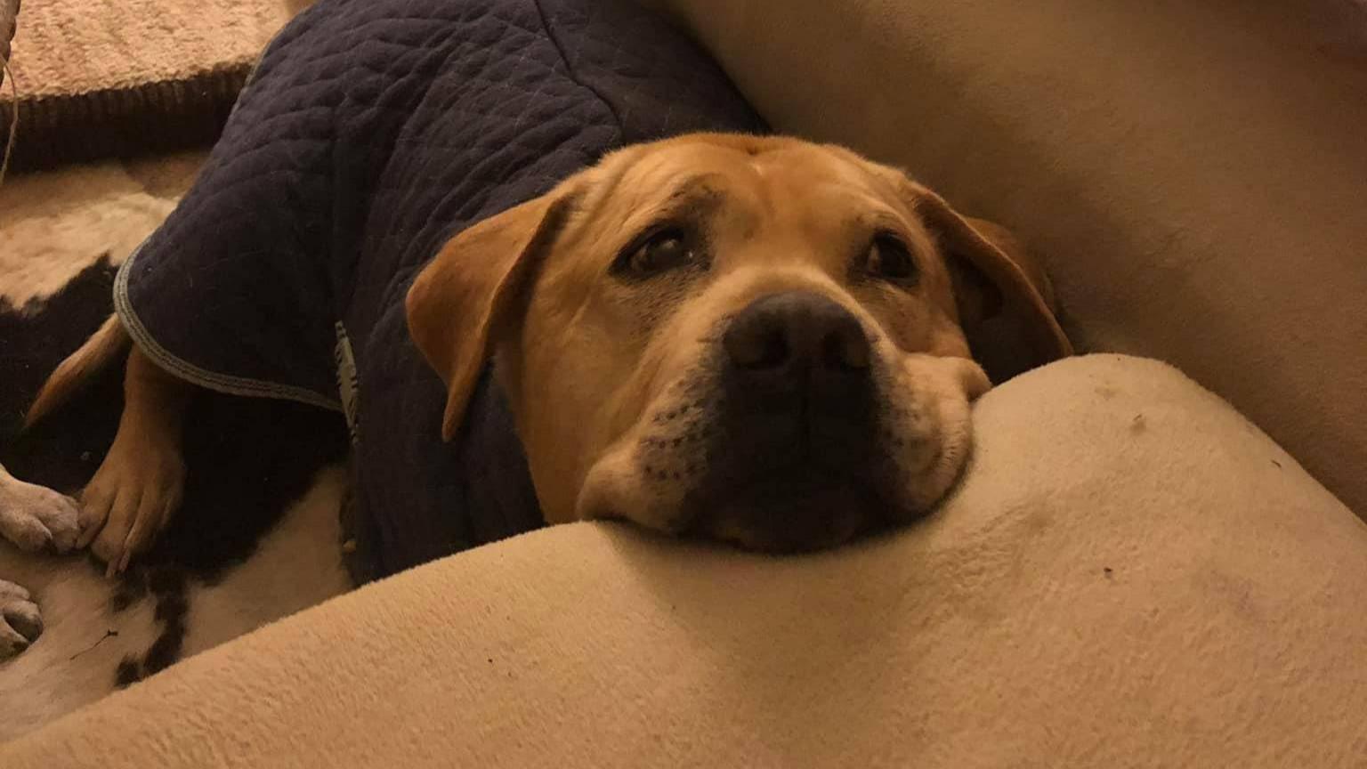 Бойфренд присмотрел за собакой своей девушки, и та чуть не умерла от смеха, увидев питомца снова