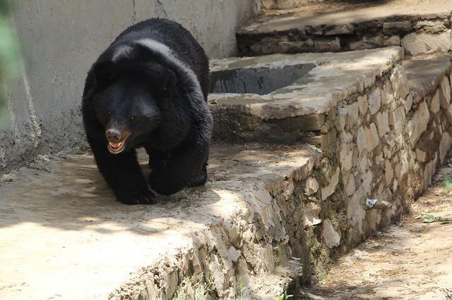 Стало известно, кого накажут за гибель ребёнка в вольере с медведями