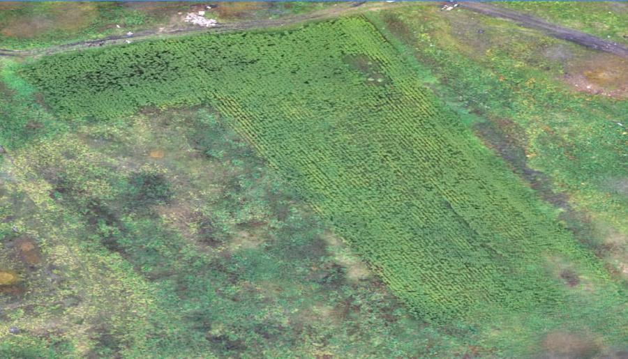 Спутниковый снимок поля, осень 2016 года. Фото предоставлено Натальей Анушкевич